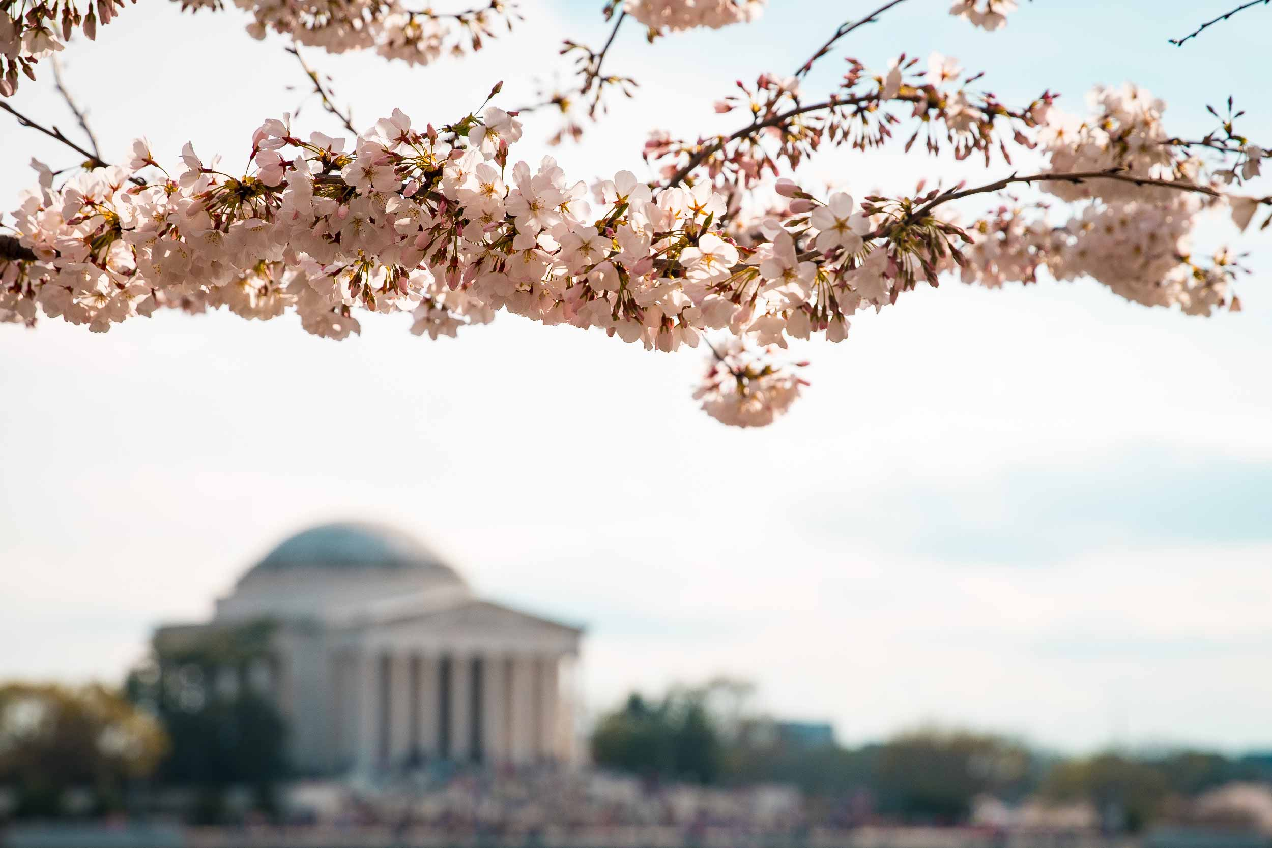Post image for Washington D.C. Travel Tips and Secrets